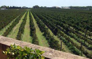 Malta Wines Venue