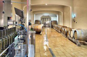 Getting married in a vineyard