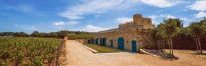 Vineyards in Malta